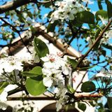 флора стоковое изображение