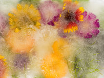 Флористическая абстракция в оранжевых тонах Стоковые Фото