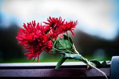 Флористическая дань стоковое изображение