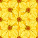 Флористическая безшовная картина - маргаритка Стоковые Изображения