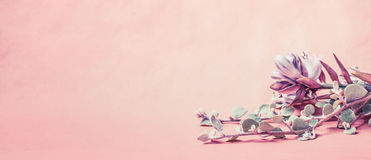 Флористическая граница с красивыми цветками на розовой предпосылке, знамени Стоковое фото RF
