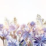 Флористическая иллюстрация с полем цветет в винтажном стиле Стоковое Изображение RF