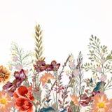 Флористическая иллюстрация с цветками поля Стоковые Фото