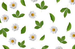 Флористическая картина предпосылки с цветком стоцвета и зеленой ветвью Стоковые Фотографии RF