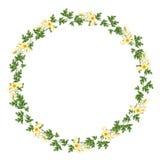 Флористическая концепция рамки круга Стоковые Фотографии RF