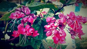 Флористическая красота Стоковые Фотографии RF