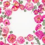 Флористическая круглая рамка с розовыми розами и евкалипт изолированный на белой предпосылке, положении квартиры, взгляд сверху Стоковые Фотографии RF