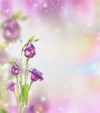 Флористическая предпосылка природы с фиолетовыми цветками и bokeh сада стоковые фото
