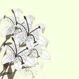 Флористическая предпосылка с букетом лилий Стоковые Изображения RF