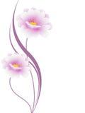 Флористическая предпосылка с розовыми цветками, элемент дизайна Стоковая Фотография RF