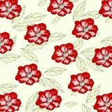 Флористическая предпосылка с цветками мака Стоковая Фотография