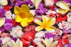 Флористическая предпосылка Стоковые Фото