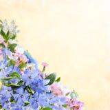 Флористическая предпосылка 17 Стоковая Фотография