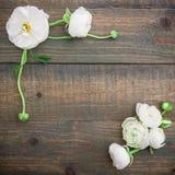 Флористическая рамка белых цветков на деревянной предпосылке Плоское положение, взгляд сверху желтый цвет картины сердца цветков  Стоковое Фото