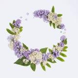 Флористическая рамка на белой сирени предпосылки, rowanberry цветет Стоковые Фотографии RF