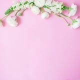 Флористическая рамка сделанная из белых цветков на нежной розовой предпосылке Плоское положение, взгляд сверху диаграмма малое см Стоковое Изображение RF