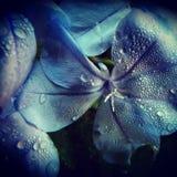 Флористические ливни Стоковое фото RF