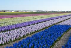 Флористические красочные поля Стоковые Изображения RF