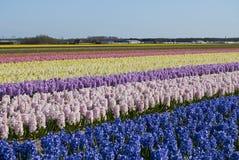 Флористические красочные поля Стоковое Изображение RF