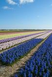 Флористические красочные поля Стоковая Фотография