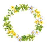 Флористический венок Травы, цветки луга Граница акварели круглая Стоковые Фотографии RF