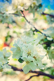 Флористический взгляд предпосылки весны через blossoming Стоковые Фотографии RF