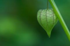 Флористический воздушный шар Стоковая Фотография