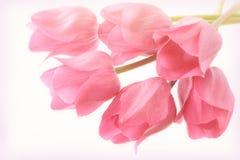 Флористический год сбора винограда и мягкая предпосылка влияний фокуса с розовыми тюльпанами Стоковое фото RF