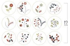 Флористический комплект с декоративными цветками, листьями и ветвями бесплатная иллюстрация