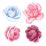 Флористический комплект цветков розового, красного, голубого белого года сбора винограда розовых на белой предпосылке Иллюстрация Стоковая Фотография