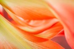 Флористический конспект стоковое изображение rf