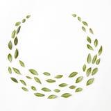 Флористический состав с меньшими зелеными листьями Стоковая Фотография