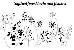 Флористический шаблон с стилизованными травами и заводами Черно-белый силуэт иллюстрация штока