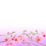 флористическое абстрактной предпосылки красивейшее стоковые фото
