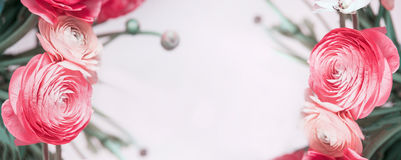 Флористическое знамя с пастельными красными лютиком или розами, Стоковые Изображения