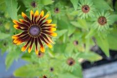 Флористическое солнце Стоковые Фотографии RF