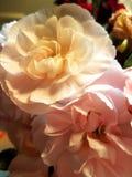 флористическо стоковая фотография