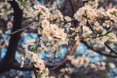 флористическо стоковое фото rf