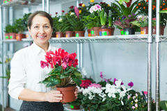 Флорист на магазине цветка Стоковые Изображения RF
