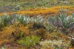 Флорида типичная scrub вегетация стоковое изображение rf