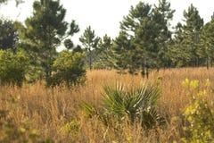 Флорида scrub среда обитания на парке штата Kissimmee озера Стоковая Фотография