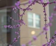 Флюиды весны стоковая фотография