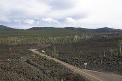 Хайвей через подачу лавы в Орегон стоковое изображение