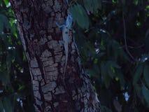 Хамелеон на дереве в саде Таиланда стоковое изображение rf