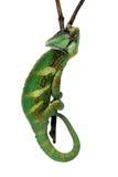 хамелеон Стоковое Изображение