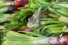 Хамелеон покрашенный зеленым цветом Стоковые Фото