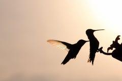 2 Хаммера радуги на подавая порте Стоковые Изображения