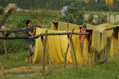 Ханой, Вьетнам: вермишель аррорута специальные въетнамские лапши сушится на бамбуковых загородках идя вперед стоковая фотография rf