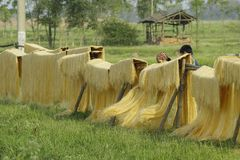 Ханой, Вьетнам: вермишель аррорута специальные въетнамские лапши сушится на бамбуковых загородках идя вперед стоковое изображение rf