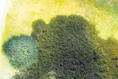 Характеристики колонии грибка и водорослей в чашка Петри для образования стоковое фото rf